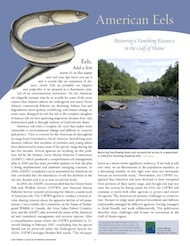 American Eels: Restoring a Vanishing Resource in the Gulf of Maine