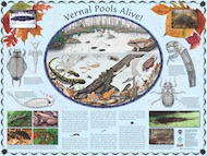 Vernal Pools Alive poster